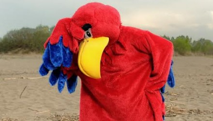 Mascot: Costume of a Red Parrot